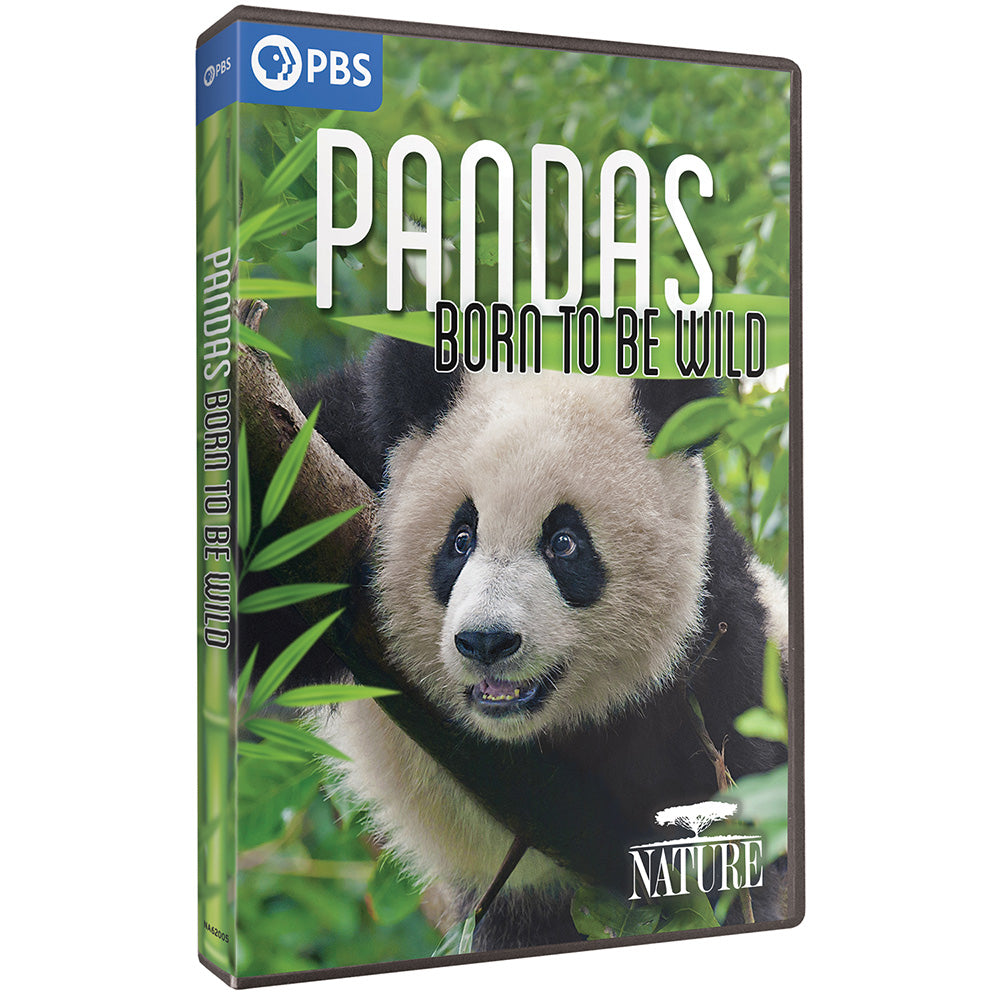 Pandas: Born to be Wild