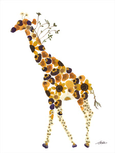 Roaming giraffe