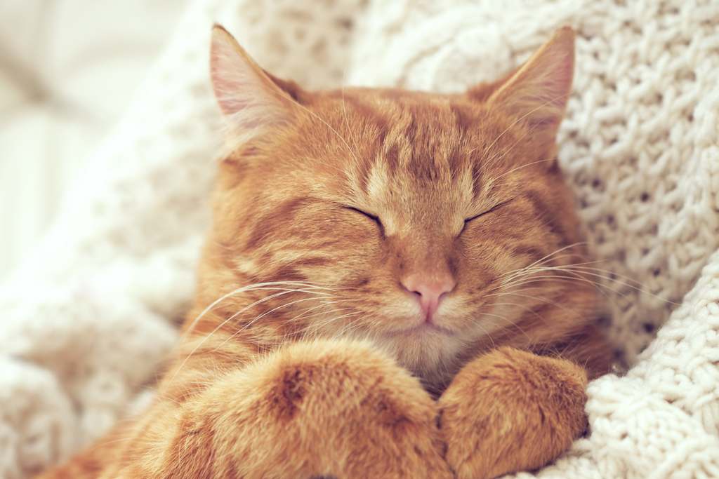10 Ways To Show Your Cat Some Love This Valentine's Day cat snuggled up with their owner