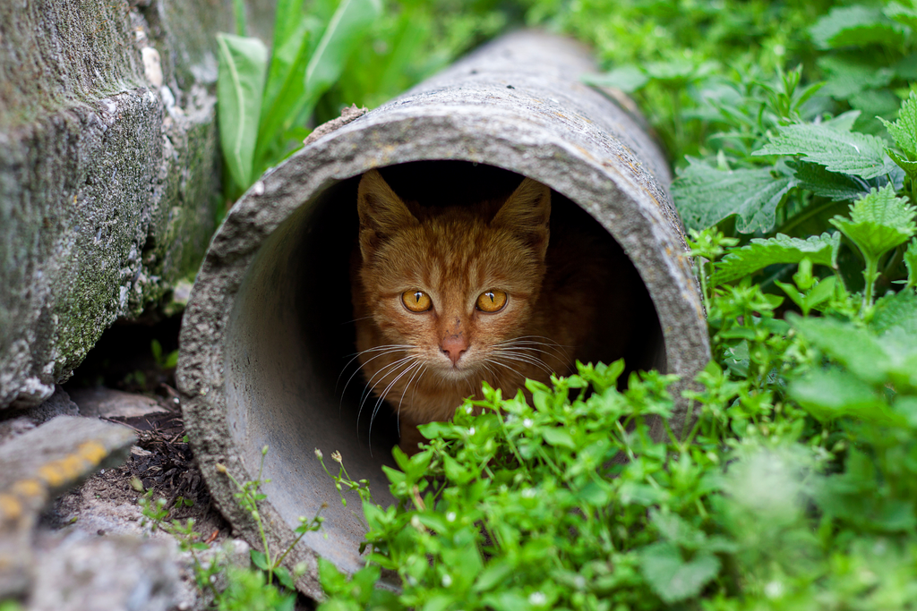 What to do if your indoor cat accidentally gets outside