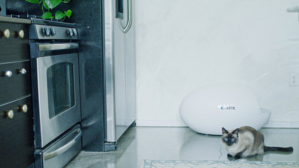 ChillX AutoEgg the greenest automatic litter box of 2020
