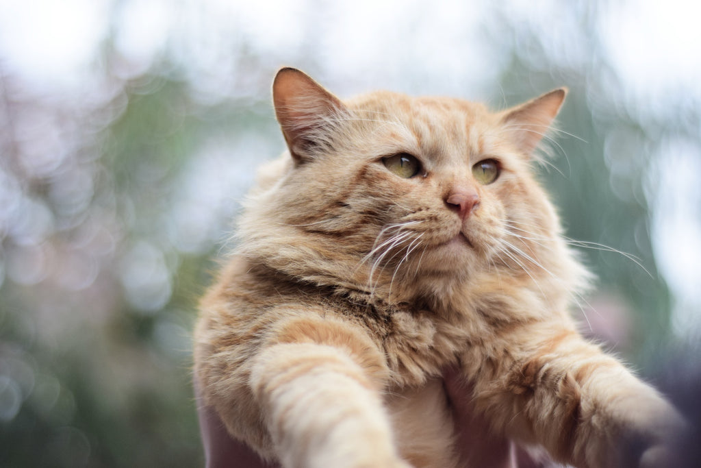 Why you should never scruff your cat