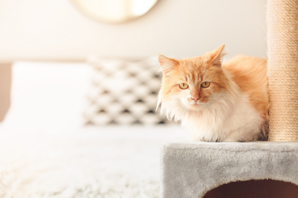 Orange cat on a cat tower in a bedroom resting