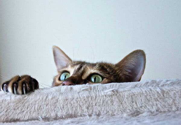 Cats are naturally curious about new spaces and their new litter box