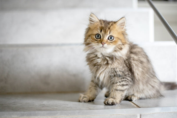Acclimating your cat to a new litter box