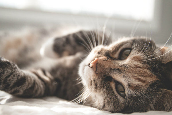 Make your cat feel more comfortable