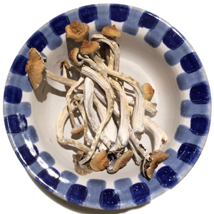 B+ 14g Whole Dried Mushrooms