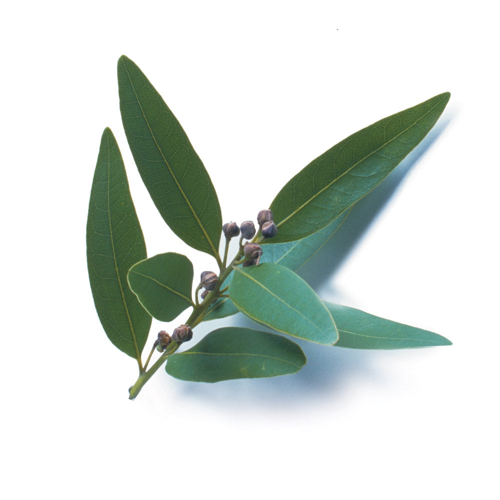 Know Your Spices - Bay Leaf or Tej Patta