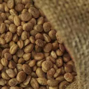 Charoli or Chironji Seeds used in EltheCook Readymade Tadka (Tempered SPice blends). Shipping worldwide