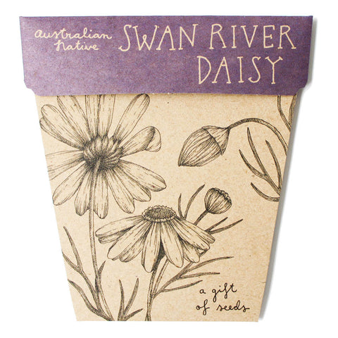 Gift of Seeds - Swan River Daisy - Scout Newcastle