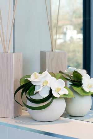 Orchids in a White Ceramic Vase
