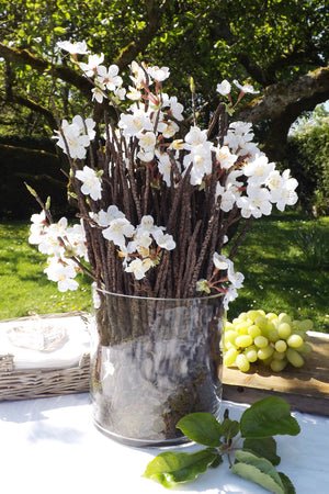 Blossom with Twigs in Glass Cylinder (White)