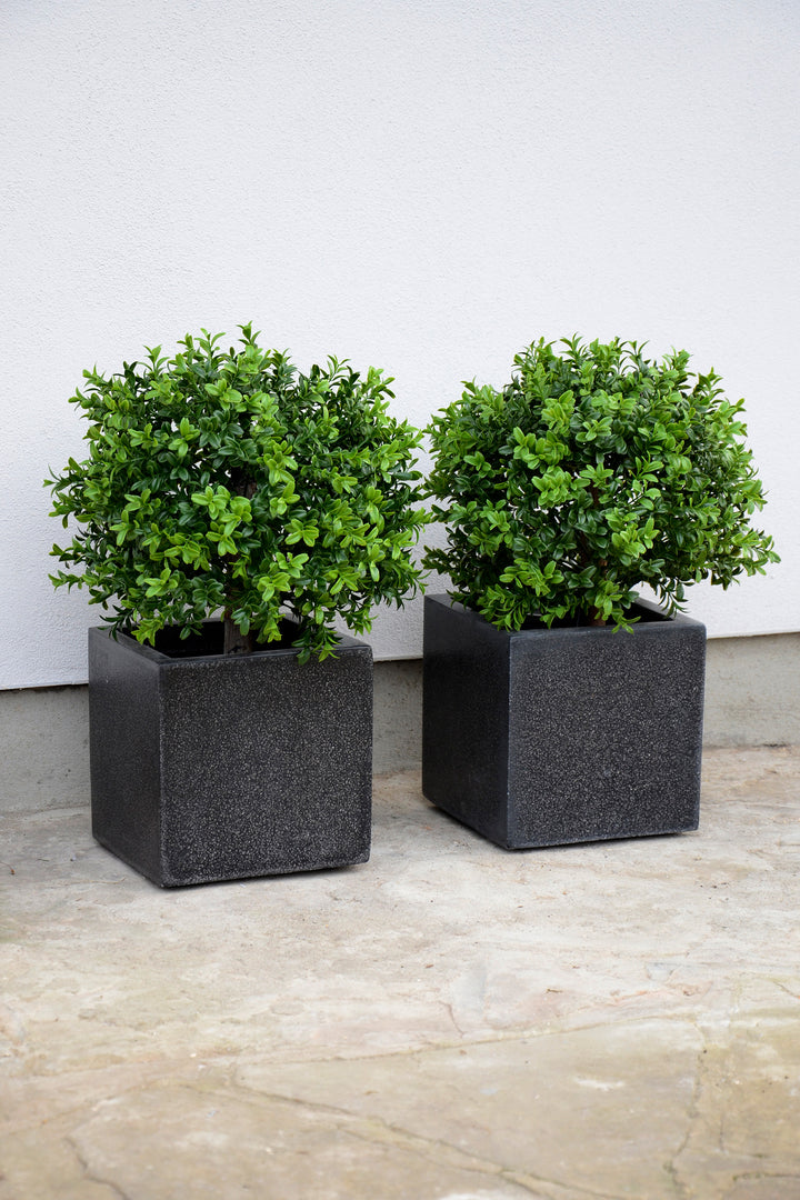 Box trees in Square Black Cube
