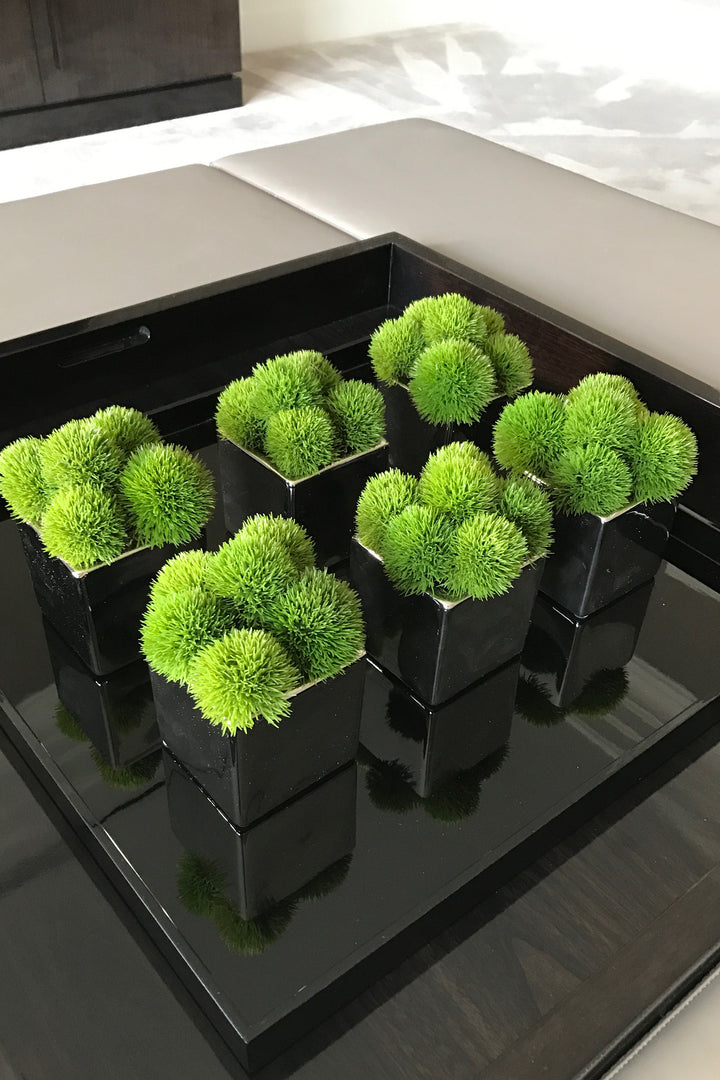 Dianthus in a Black Glass Cube