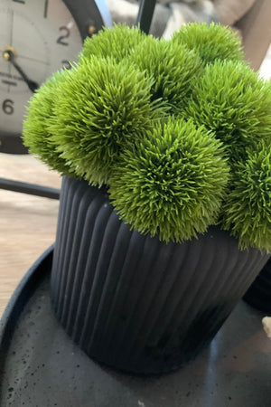 Dianthus in a Matt Black Ridged Vase
