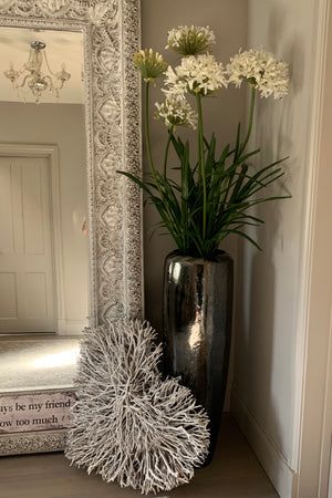 Agapanthus in a Metallic Grey Planter