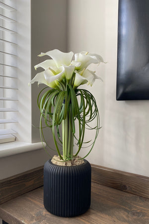 Calla Lily in a Black Ridged Vase