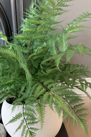Fern in a Stone Pot