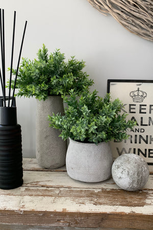 Ruscus in Grey Stone Pots