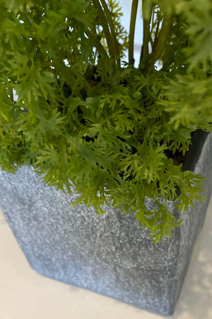 Parsley in a Slate Stone Cube