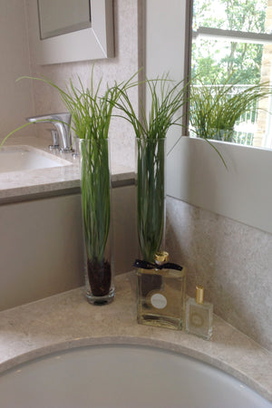 Grasses in a Glass Cylinder