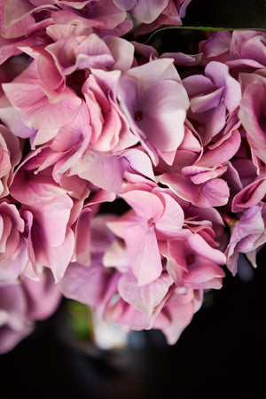 Hydrangea in a Black Goldfish bowl Delicate Pink