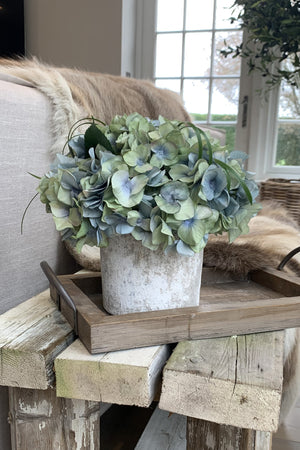 Hydrangeas in a Lime Washed Stone Pot (Blue/Green)