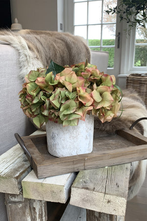 Hydrangeas in a Lime Washed Stone Pot (Coral/Green)