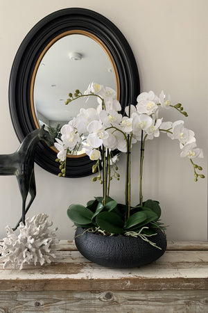 Orchids in Black Ceramic Bowl