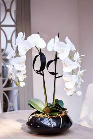 Orchids in Black Gloss Bowl