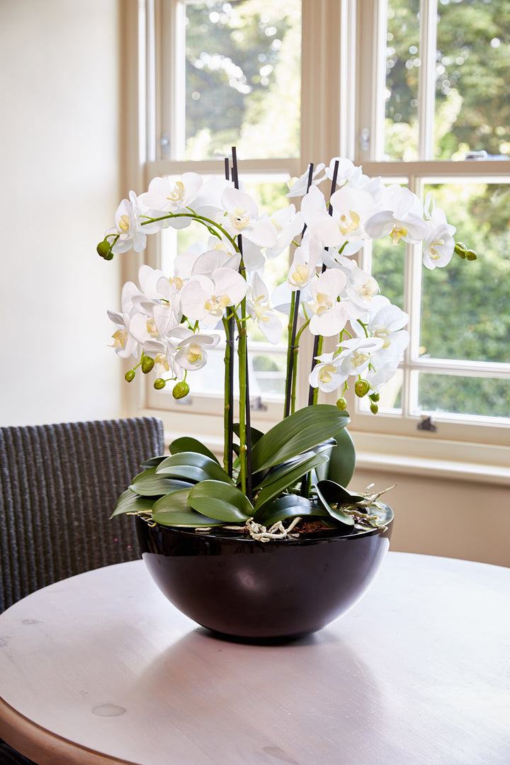Orchids in a Large Black Bowl