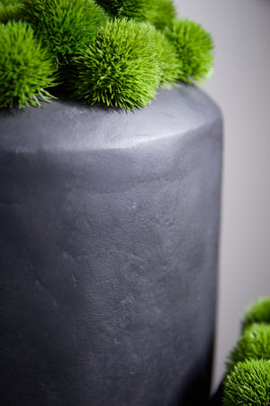 Dianthus in a Matt Black Planter