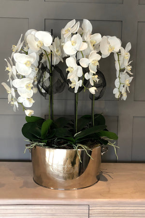 Orchid in a Large Champagne Cooler