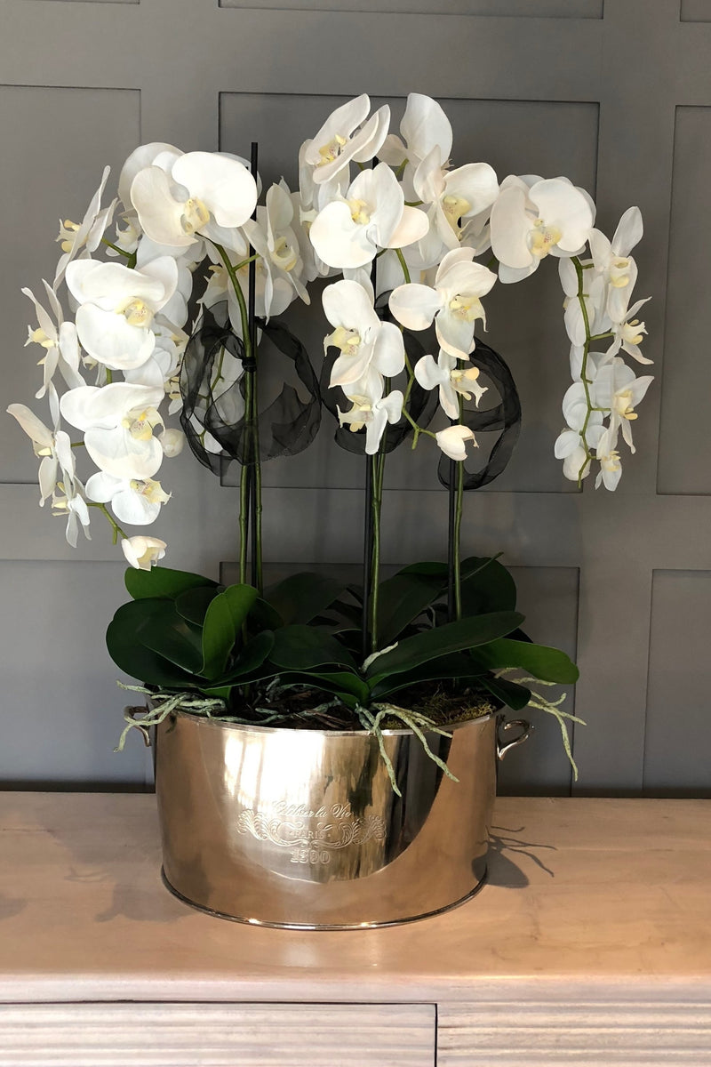 Orchid In A Large Champagne Cooler Rtfact Flowers