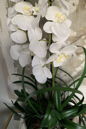 Orchid in an Ivory Ceramic Vase