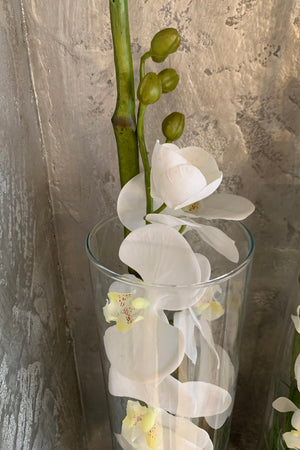 Orchids in a Glass Cylinder