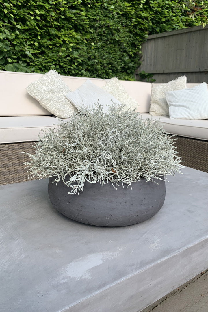Curly Grass in a Grey Stone Bowl
