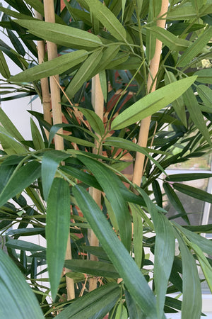 Artificial Bamboo Tree (Phyllostachys)