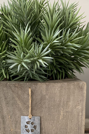 Succulents in a Grey Washed Wooden Pot