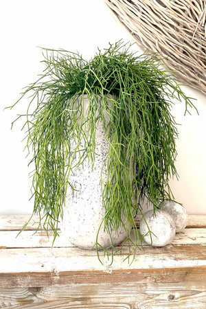 Air Grass in a Grey Stone Vase