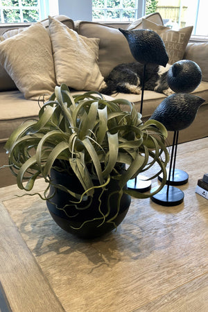 Airplants in a Black Ceramic Vase