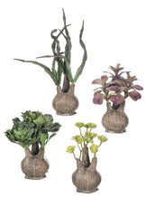 Load image into Gallery viewer, Succulents, Set of 4