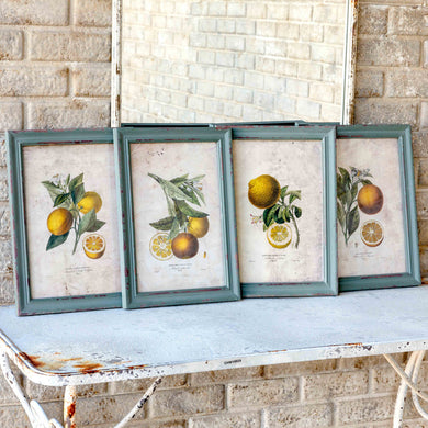 Citrus & Blossom Framed Prints, Set of 4