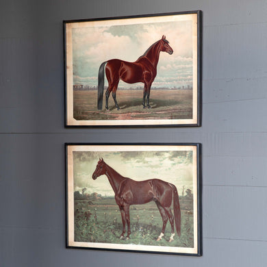 Prized Horse Prints S/2