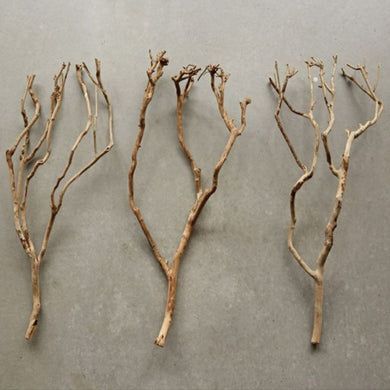 Tea Tree Branches, Set of 3