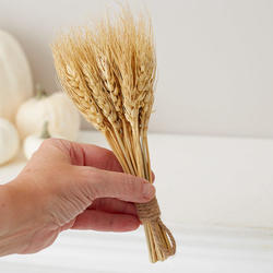 Preserved Wheat Bundle