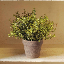 Load image into Gallery viewer, Potted Baby Grass Bush