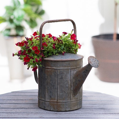 Dark & Handsome Watering Can