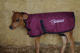 Thermoo calf blanket Jersey