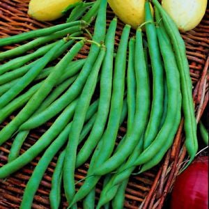 Dwarf French Beans (Blue Lake)